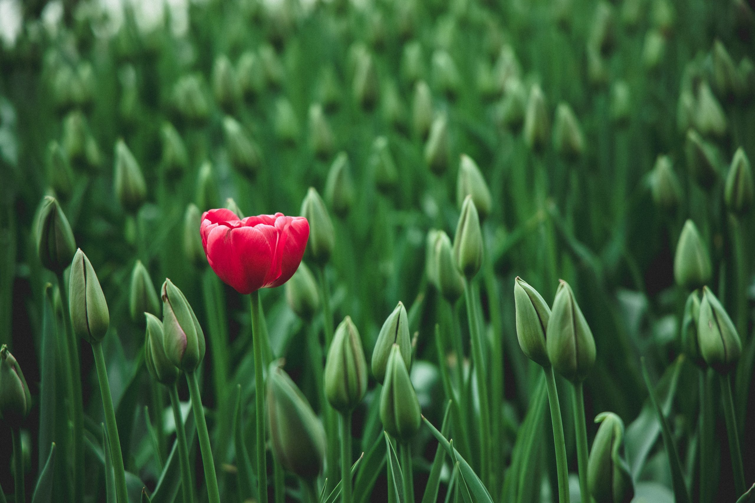From Our Chaplain: Waiting for Spring